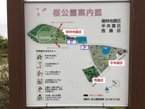 sakura-park_3