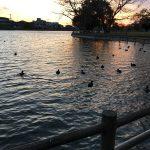 三島市近隣の公園紹介   子供の遊び場があくさんある沼津市岡一色の門池公園