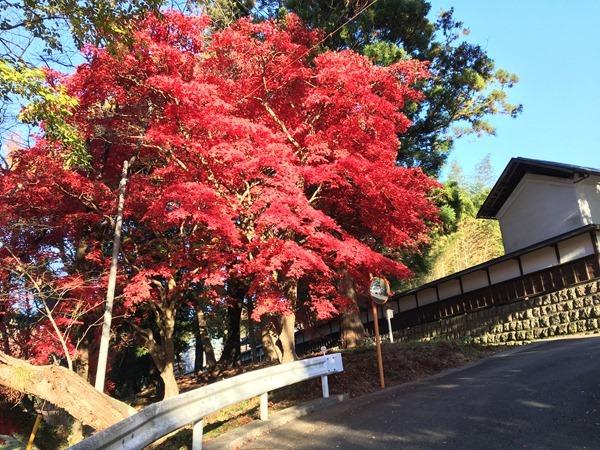 kouyou-mishima_10