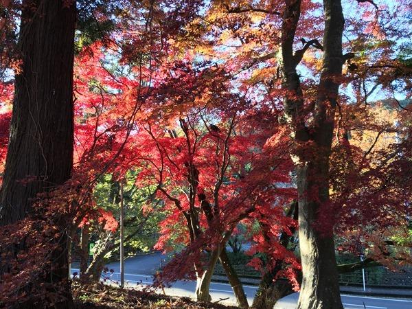 kouyou-mishima_14