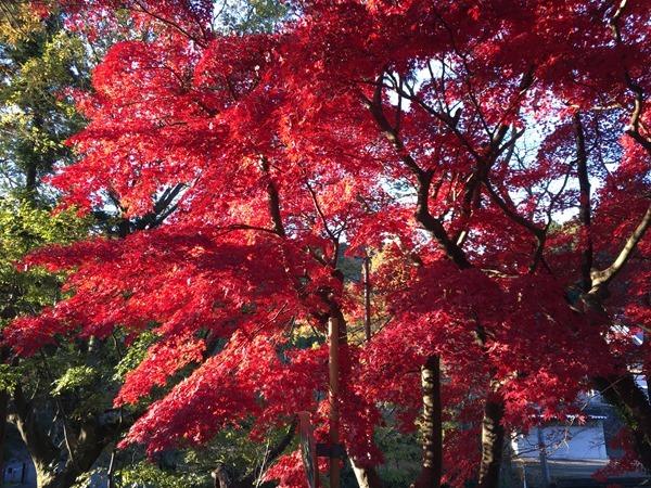 kouyou-mishima_1