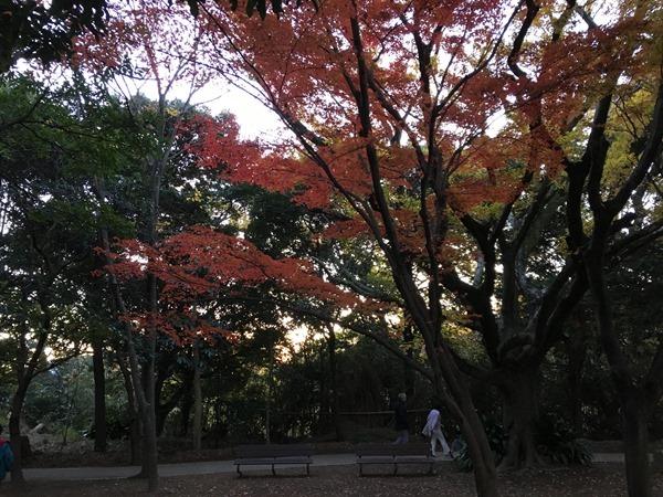 kouyou-mishima_31