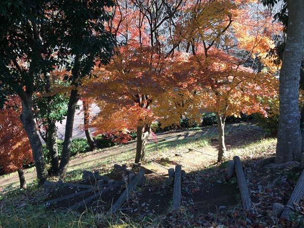 kouyou-mishima_4