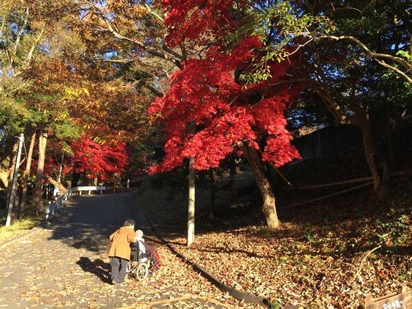 kouyou-mishima_9
