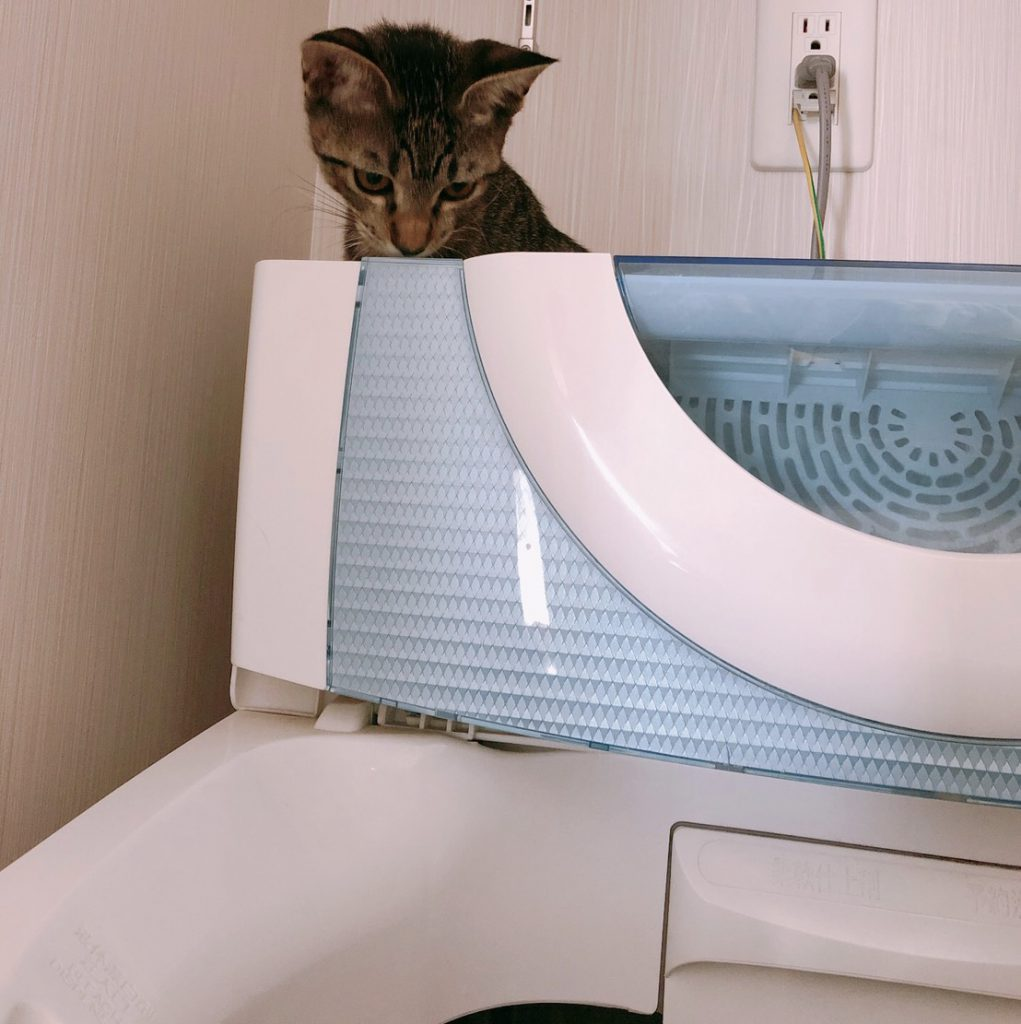 洗濯機の中が気になって仕方ないネコ▼